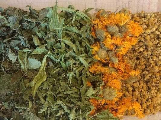 sortie herboristerie - plantes médicinales - Ploërmel