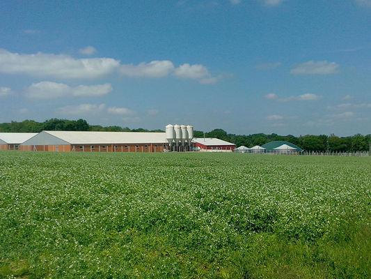 La ferme de Sensie - ST-Nicolas du Tertre - Producteur locaux