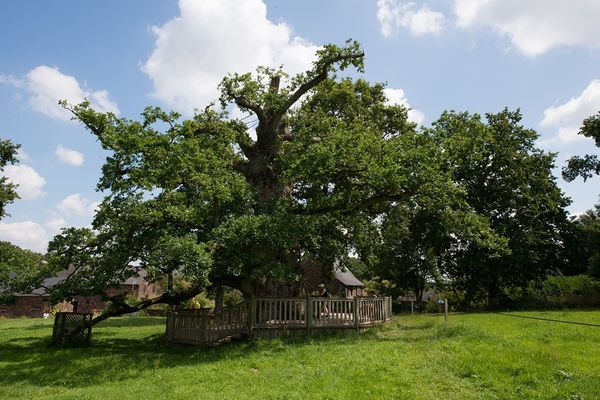 Chêne à Guillotin - randonnée contée
