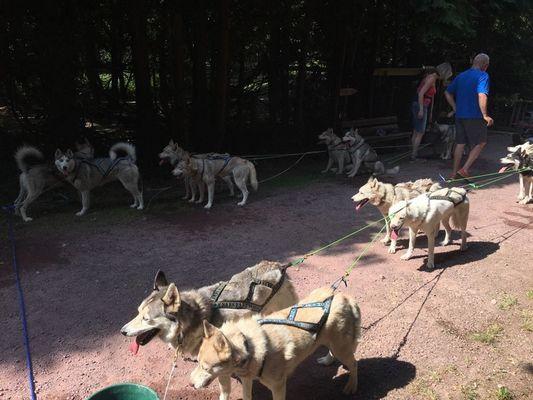 Ferme Nordique_Paimpont_chiens_5