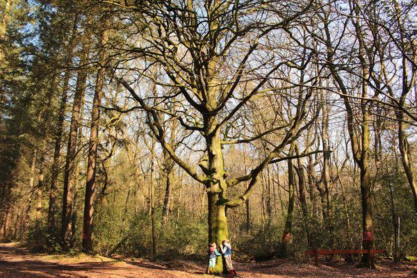 Forêt Montfort-sur-Meu automne