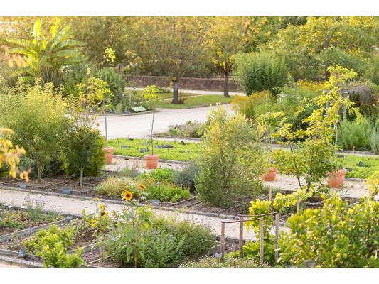 Jardin Botanique Emmanuel Berthier (2)