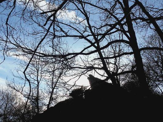 Vallon de la chambre au Loup Iffendic Brocéliande Bretagne ©office de tourisme lac de Trémelin (5)