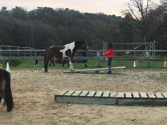 cheval Brocéliande - centre équestre - Tréhorenteuc - Morbihan