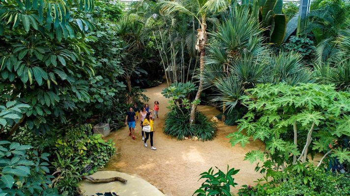 hd1-serre-tropicale-c-terrabotanica-1990103