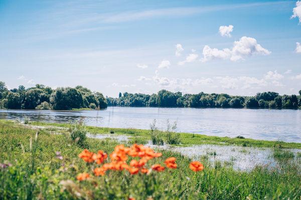 Vue sur la Loire, confluence de Bouchemaine © Romain Bassenne