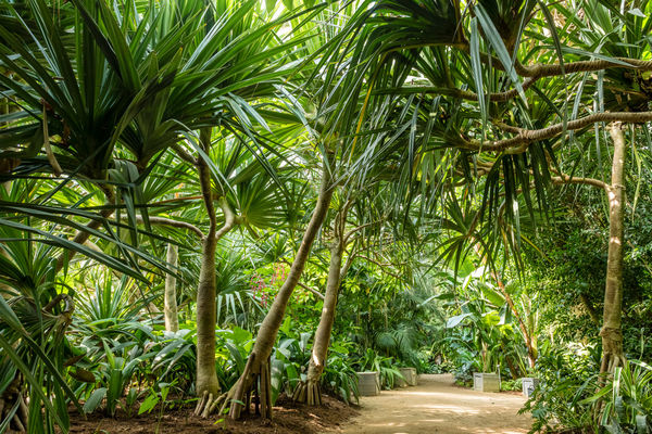 serre-tropicale-terra-botanica-copyright-sebastien-gaudard-destination-angers-5276-1000px-928498