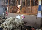 Tonte-de-mouton