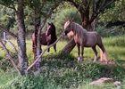 Ecurie poney club du soleil - Ploërmel - Morbihan