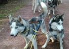 Ferme Nordique_Paimpont_chiens_3