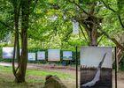 Festival-Photo-La-Gacilly-2019-----Jean-Michel-Niron--5-