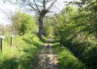 Chemin de la biodiversité