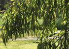 Arboretum Iffendic