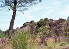 Vallon de la chambre au Loup Iffendic Brocéliande Bretagne ©office de tourisme lac de Trémelin (4)