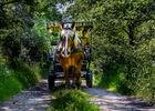 Les Calèches de Barenton_Paimpont_4