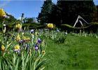 iris-jardins-broceliande-2020