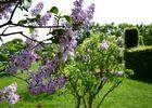 lilas-jardins-broceliande