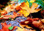 Contes d'automne_pexels-warren-blake-1477459