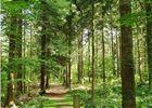 Forêt de Montfort-sur-Meu Petite Cité de Caractère Bretagne Brocéliande ©office de tourisme Lac de Trémelin