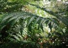 Forêt Montfort-sur-Meu