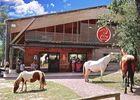 cheval Brocéliande - centre équestre - manège - Tréhorenteuc - Morbihan