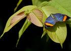 terra-botanica-angers-2016-3-1148056