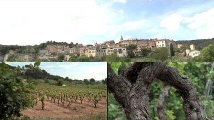 Dracénie Provence