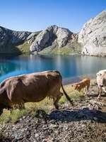 """Sortie Natura 2000 : """"Une histoire de pastoralisme aux portes de l'Espagne"""""""