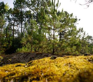 Une balade en forêt au bord de la plage