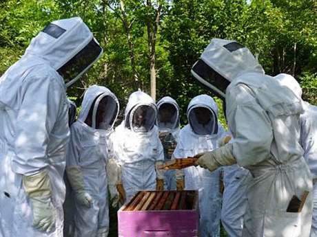 Alla scoperta di un apiario in apicoltura naturale