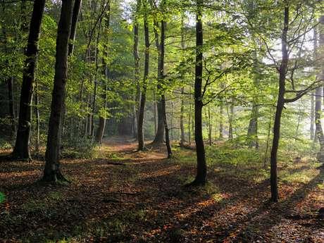 Parcours Trail · Forêt d'Arques (Circuit Rouge)