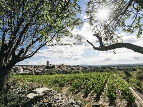 Weineprobe - Château Maris