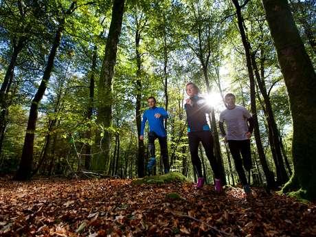 Circuit Trail n°10 : Grand Trail des Monts de Guéret