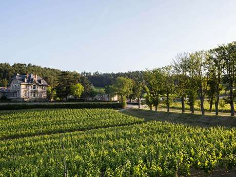 Cata de 6 vinos - Visita del experto - Bodega Domaine de Baronarques