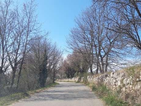 Cyclo - Les faux plats de Provence