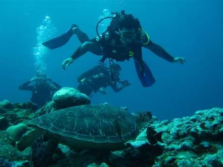 Zarlor Dive into the deep blue sea - Saint Leu