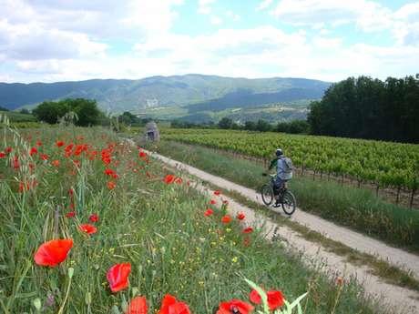 Saignon - Le plateau de Caseneuve
