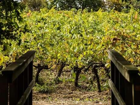 Wine Tasting - From the Vineyard untill the wine cellar- Château Caux et Sauzens