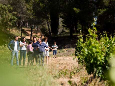 Vineyard Walk + Picnic - Château Grand Moulin Winery