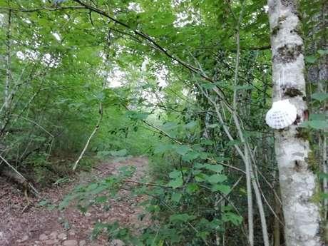 VTT - Circuit 6 : Le Bois De L'ours
