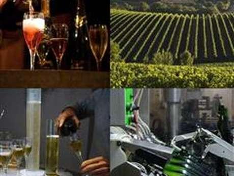 Dégustation de vins - Bulles & Initiation - Maison Guinot