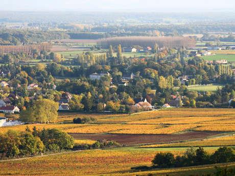 Givry : Boucle vélo du bourg historique au vignoble