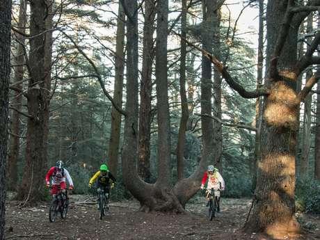 Bonnieux - Forêt des cèdres du Petit Luberon