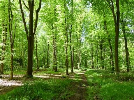 Parcours Trail · Forêt d'Arques (Circuit Orange)