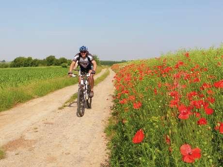 Fietsroute: Mons, eerbetoon aan 1914-1918