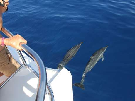 Zarlor thrills and spills - Dolphin and whale watching from a boat - Fun group excursion