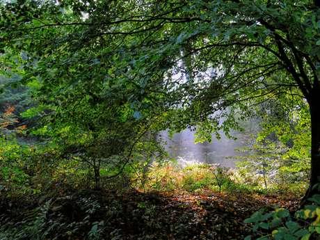 Parcours Trail · Forêt d'Arques (Circuit Vert)