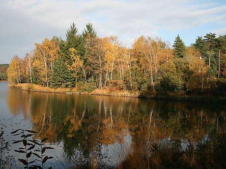 L'étang de Miel