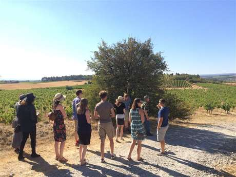 Private minibus excursion - Day - Visit of 3 vineyards & Wine tasting - F / GB - Trésor Languedoc Tours