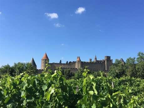 Excursion en minibus partagé - 1/2 Journée - Découverte des vins de l'Aude - Fr/GB - Sun-Tour